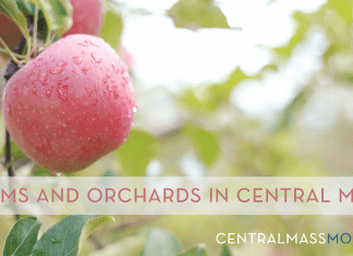 Farms and Orchards | Central Mass Mom