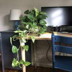 Lessons Learned from Houseplants | Central Mass Mom