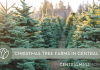 Christmas Tree Farms in Central Mass | Central Mass Mom